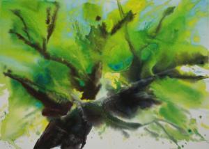 Mon Mûrier Aquarelle Dominique Coppe